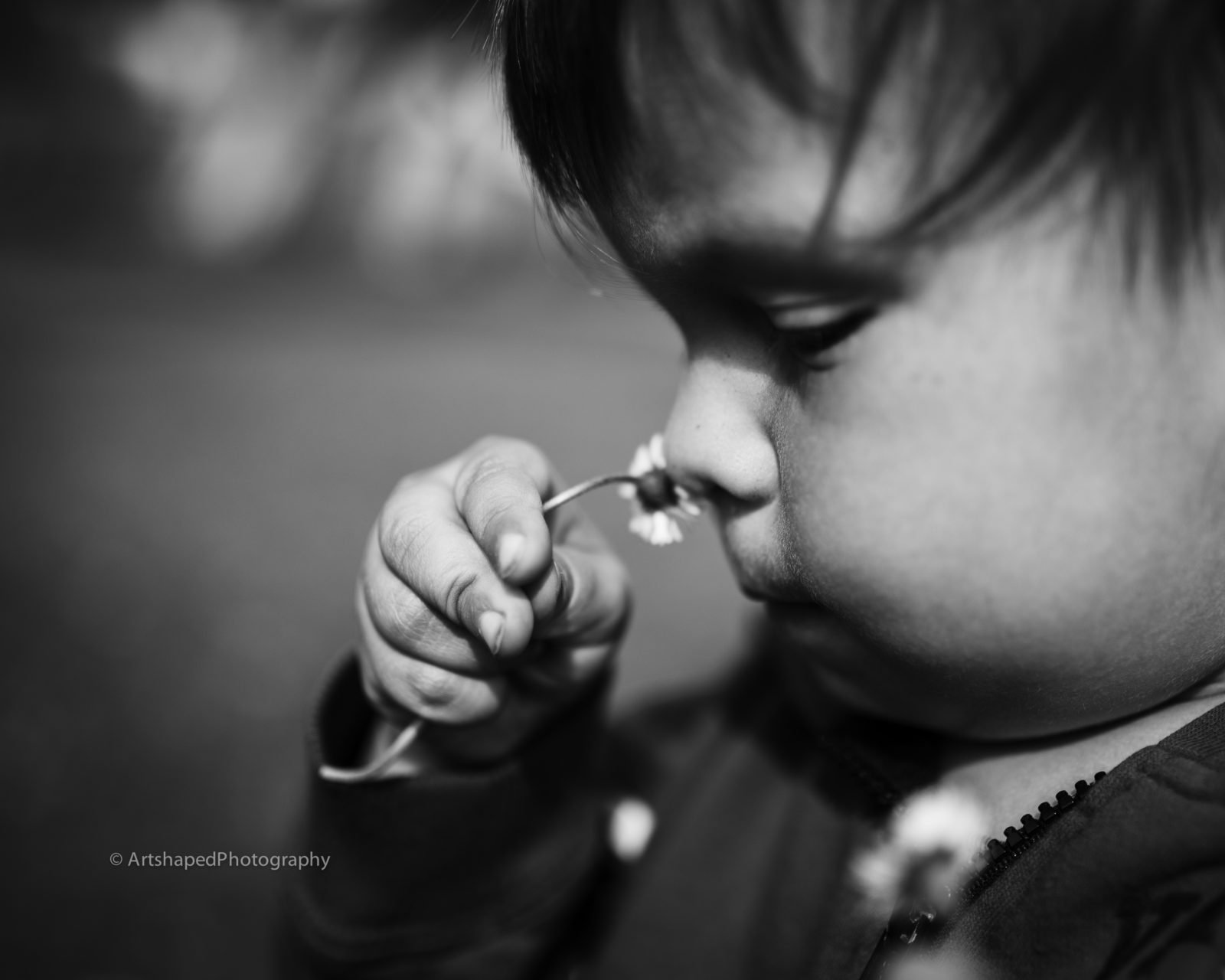 In this black and white photograph ArtShaped Photography a toddler discovers the wonders of natue by taking in the smell of a freshly picked daisy.